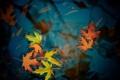 Картинка Water, Autumn, Leaves, Maple