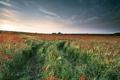 Картинка поле, пейзаж, маки