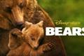 Картинка Медведи, документальный, Bears, Disneynature