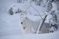 Картинка зима, снег, друг, взгляд, собака