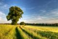 Картинка дорога, поле, дерево, весна