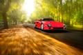Картинка красный, скорость, ferrari, f40