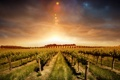 Картинка облака, виноград, горизонт, пейзаж, солнце, Grape, грядки