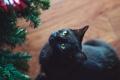 Картинка кошка, кот, черный, елка