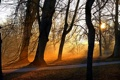 Картинка свет, деревья, парк, утро