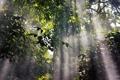 Картинка солнце, лучи, деревья, природа, парк, растения, армения