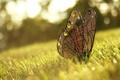 Картинка трава, бабочка, украшение