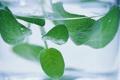 Картинка листья, вода, стакан, мята