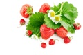Картинка клубника, земляника, цветы, листва, ягоды