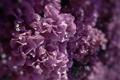 Картинка фиолетовый, макро, цветы, сиреневый, цвет, лиловый, бугенвиллея