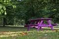 Картинка макро, скамейка, природа, фиолетовая