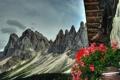 Картинка крыша, цветы, горы, природа, голова, олень, рога
