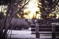 Картинка холод, зима, снег, ветки