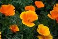 Картинка листья, цветы, стебли, лепестки, жёлто - оранжевые