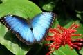 Картинка цветок, макро, природа, бабочка, листок, flower, nature