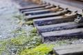 Картинка макро, природа, рельсы, железная дорога