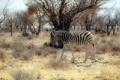 Картинка природа, зебра, Африка
