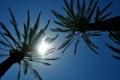 Картинка небо, солнце, пальмы, отдых