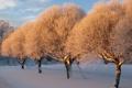 Картинка зима, снег, деревья, закат