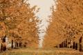 Картинка природа, осень, деревья