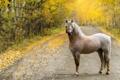 Картинка осень, конь, дорога