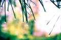 Картинка вода, капли, свет, растения, после дождя