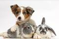 Картинка animals, dog, bunny, friends, pig...