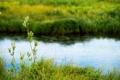 Картинка тундра, трава, озеро, лето