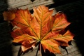 Картинка макро, осень, лист, доски