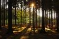 Картинка лес, солнце, деревья, природа, Чехия, Hurky