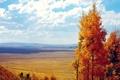 Картинка поле, осень, облака, деревья, листва, вид, желтая