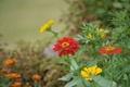 Картинка трава, листья, цветы, парк, лепестки, сад, луг