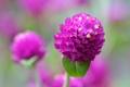 Картинка цветок, природа, лист, растение