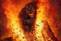 Картинка осколки, огонь, ярость, рога, Демон