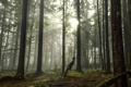 Картинка лес, наклон, мужчина