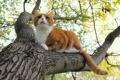 Картинка кот, рыжий, кошка, природа, дерево