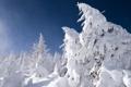Картинка зима, лес, небо, снег, деревья, ель
