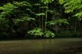 Картинка деревья, река, скалы