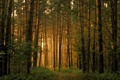 Картинка лучи, деревья, Лес, дорога. сонце, заросли. природа