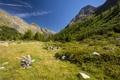 Картинка зелень, деревья, горы, природа, камни