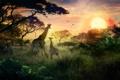 Картинка солнце, закат, природа, жирафы, детеныш, сафари