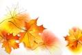 Картинка осень, листья, коллаж, клен, открытка