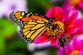 Картинка цветок, макро, природа, бабочка, flower, nature, butterfly