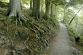Картинка природа, корни, деревья, дорога