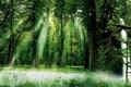 Картинка зелень, лес, лето, трава, солнце, лучи, листва