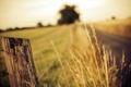 Картинка дорога, лето, пейзаж, забор
