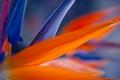 Картинка цветок, макро, оранжевый