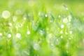 Картинка зелень, лето, трава, брызги