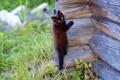 Картинка кошка, кот, кошки, стена, дерево, обои, взбирается