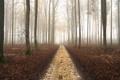 Картинка дорога, лес, пейзаж, природа, туман